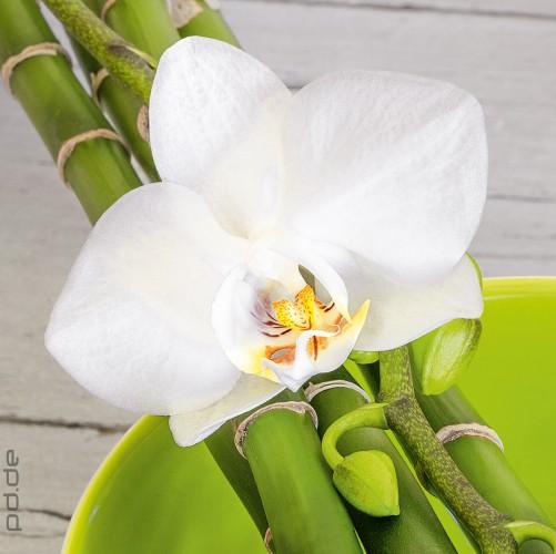 glasbild wei e orchidee auf bambus blume bl te pflanze zen. Black Bedroom Furniture Sets. Home Design Ideas