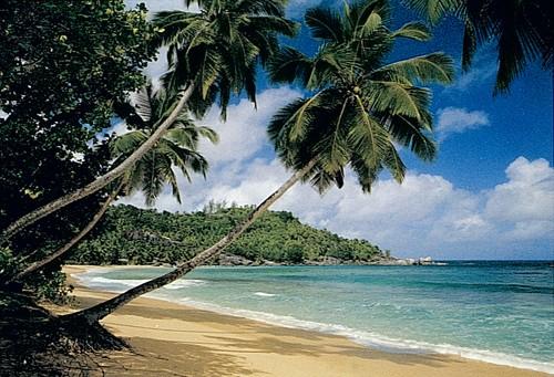 Fototapete seychelles palmen strand meer insel urlaub ebay for Fototapete urlaub