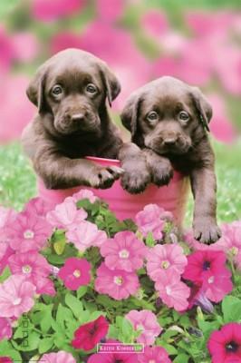 poster keith kimberlin labrador flowers hunde welpen ebay. Black Bedroom Furniture Sets. Home Design Ideas