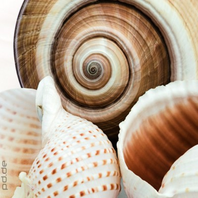 glasbild soft shells muscheln strand meer badezimmer dekoration 20x20 cm ebay. Black Bedroom Furniture Sets. Home Design Ideas