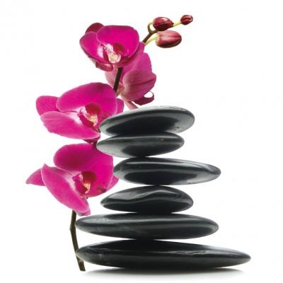 glasbild floral balance gleichgewicht hot stones hei e steine orchidee 30 x 30cm ebay. Black Bedroom Furniture Sets. Home Design Ideas