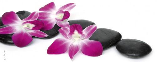 glasbild pinke orchideebl ten steine stein blume rosa lila violett 125 x 50 cm ebay. Black Bedroom Furniture Sets. Home Design Ideas