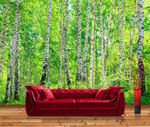 Details zu premium vliestapete fototapete birkenwald laubwald bäume