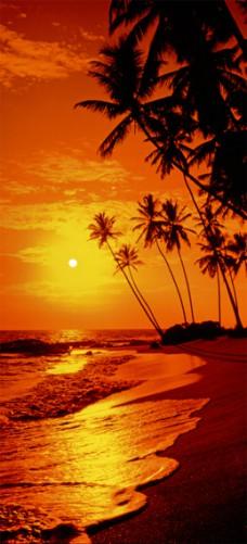 Fototapeten Palmenstrand : T?rtapete Palmen am Strand im Sonnenuntergang