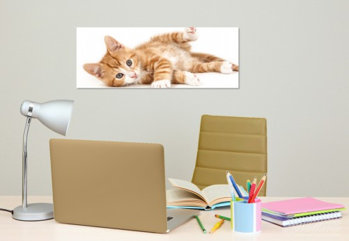 glasbild s e katze mit gro en augen rot wei getigert. Black Bedroom Furniture Sets. Home Design Ideas