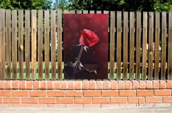 Gartenposter Rote Rose Single – Bild 2