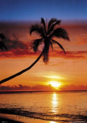 Poster Sunset Palm