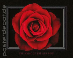 Poster Red Rose - magic - Mini