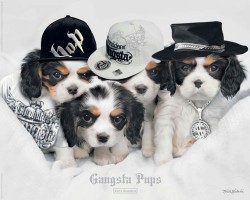 Poster Keith Kimberlin - gangsta pups