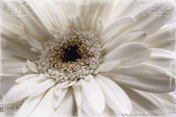 Deco Panel White Flower – Bild 1