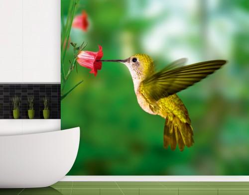 fototapete gr ner kolibri an roter glockenblume. Black Bedroom Furniture Sets. Home Design Ideas