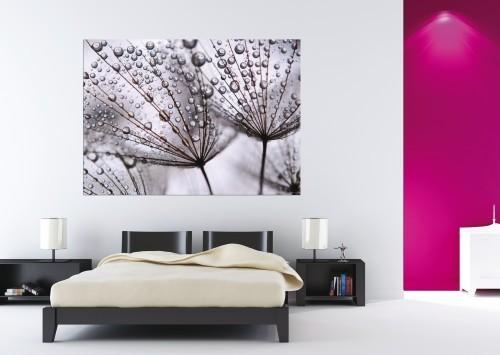 fototapete pusteblume mit wassertropfen. Black Bedroom Furniture Sets. Home Design Ideas