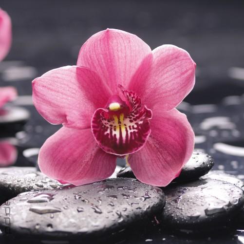 Gestaltungsideen Durch Orchiden ~ Home Design Inspiration Und