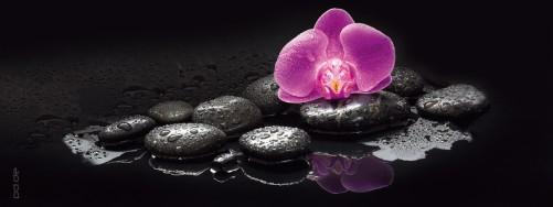 glasbild rosa orchidee und schwarze steine im wasser. Black Bedroom Furniture Sets. Home Design Ideas
