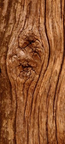 Selbstklebende Tapete Entfernen : Selbstklebende T?rtapete Holzstamm mit Asteinschluss ? Bild 1