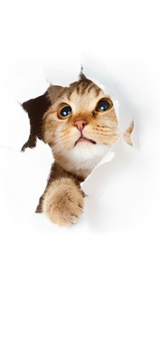 Selbstklebende Tapete Anleitung : Selbstklebende T?rtapete Katze mit Blick nach oben ? Bild 1
