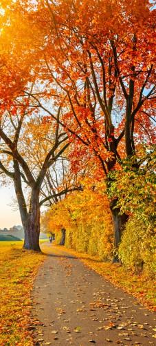 Selbstklebende Tapete Entfernen : Selbstklebende T?rtapete Herbstlicher Waldweg [27/0]
