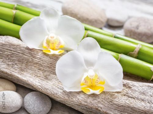 glasbild bambus und orchideen auf holz und steinen. Black Bedroom Furniture Sets. Home Design Ideas