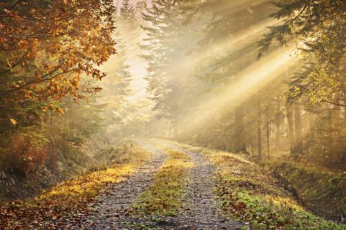 Fototapete waldweg  Fototapete Waldweg im Herbst mit Sonnenschein